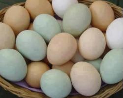 خطورة غسل البيض
