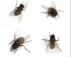 كيفية تطرد الذباب من المنزل