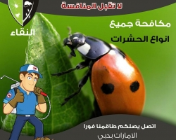 مكافحة الحشرات # رأس الخيمة